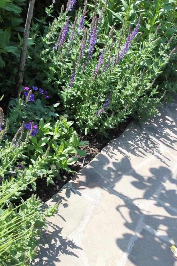 Якщо в саду росте шавлія