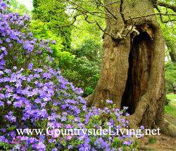 Природний сад (сад в природному стилі)