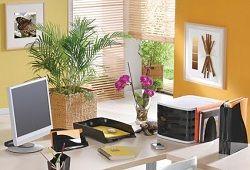 Фітодизайн офісу як перспектива успішного бізнесу