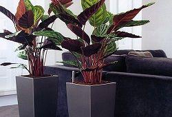 Рослини для сумовитих офісних приміщень: як підібрати і розставити?