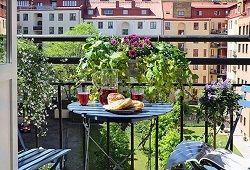 Декоративне оформлення балкона і лоджії квітами