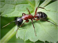 як позбутися від мурах