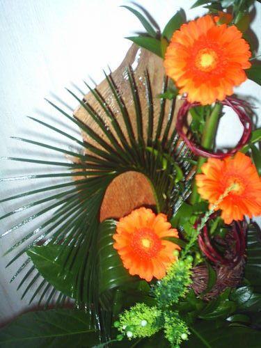 Фото квітів гербер - вишукана краса
