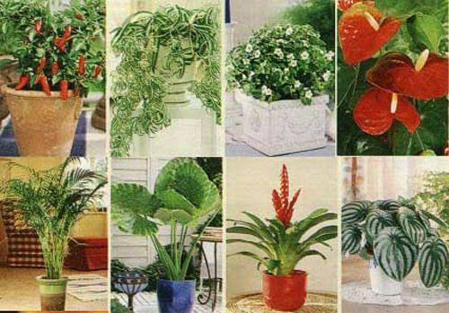 Фото квітучих кімнатних рослин в інтернеті