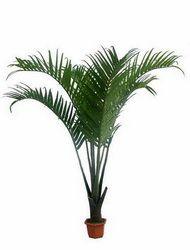 Кокосова пальма: вміст у домашніх умовах