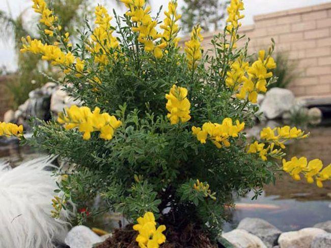 Фото кімнатних рослин і квітів