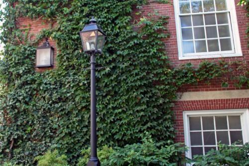 Фото плюща в саду і квартирі