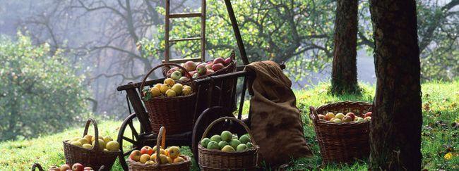 Фруктовий сад по фен-шую