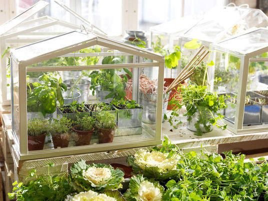 Міні-теплиця від IKEA. Фото з сайту http://thegreenhead.com