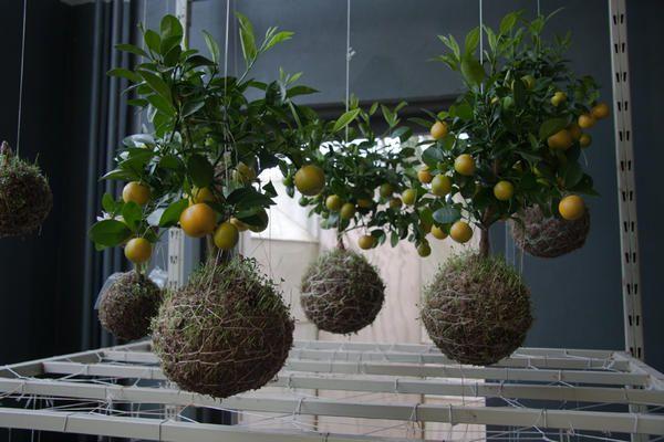 Підвісна сад Федора ван дер Фалька. Фото з сайту http://1.bp.blogspot.com/