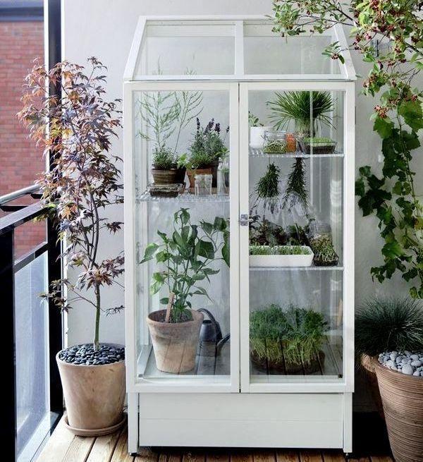 Оранжерея у вітрині шафі. Фото з сайту http://gardenista.com