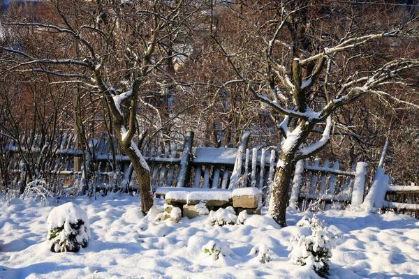 Де зимують садові і городні шкідники і як їх знешкодити