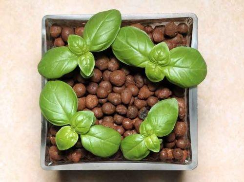 Гідропонний метод вирощування