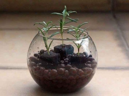 Гідропоніка - вирощування рослин