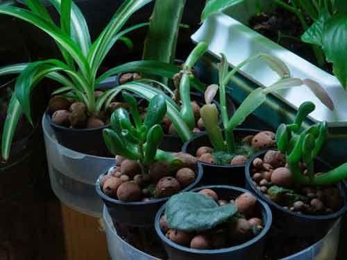 Квіти і гідропоніка