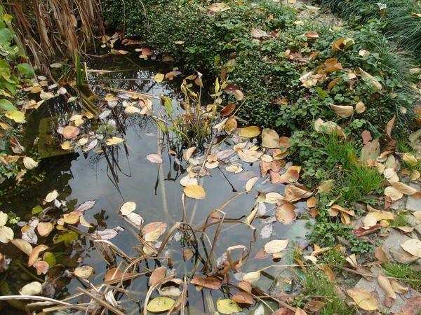 Готуємо осінній водойму до зими: 5 найважливіших завдань