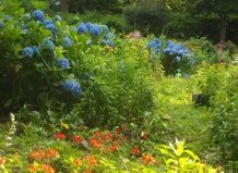 Групи красивоцветущие чагарників