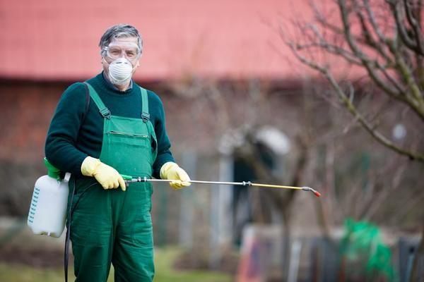 Коли інші засоби не дали результату, в хід йдуть інсектициди