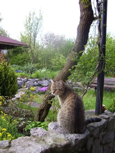 Господиня нашого саду