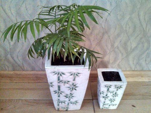 Виробляємо перевалку пальми в інший вазон