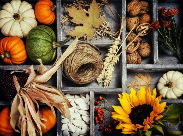 Ідеї   осінніх виробів з природних матеріалів