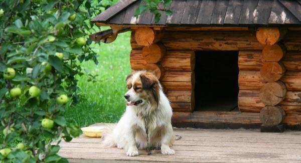 Цікаві ідеї собачих будок