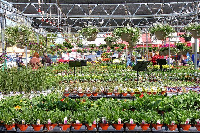 Інтернет-магазин квітів і рослин - особливості та переваги