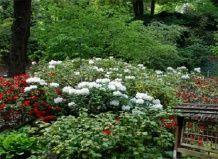 Японський сад кайзерслаутерн: шматочок японії в європі