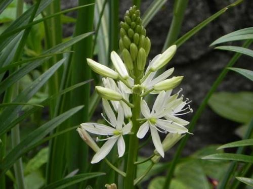 Екзотичні рослини в наших садах