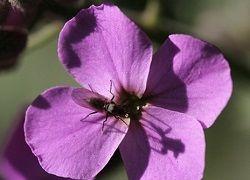 Як швидко позбутися від мошок в квіткових горщиках?