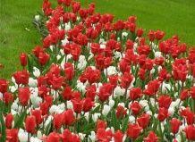 Kак квіти захопили світ