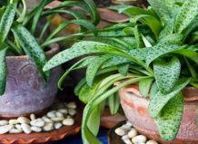 Як домашні рослини допомагають нашому здоров`ю