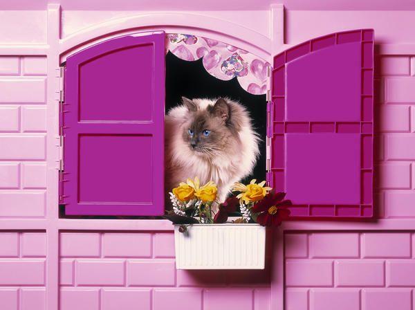 Як облаштувати затишне житло для кішки на дачі