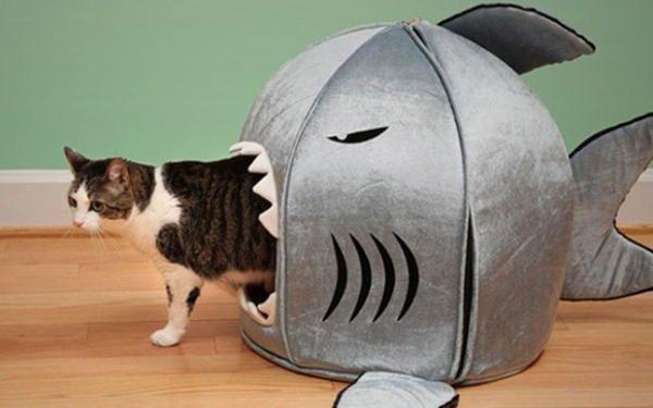 Будиночок-риба, фото з сайту http://cdn.theanimals.pics