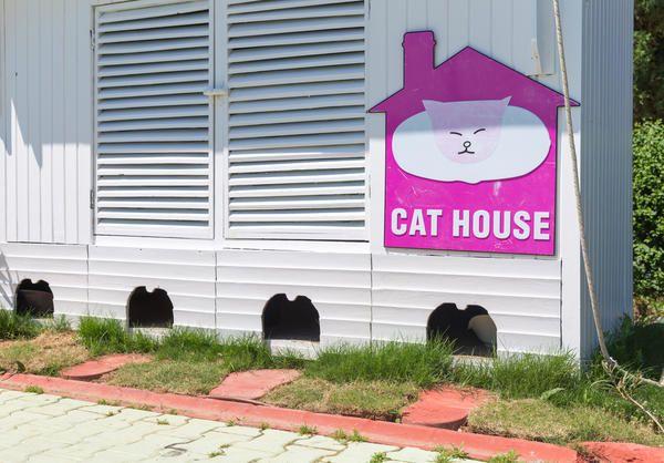 Будиночки для кішок