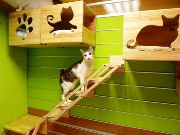 Котячі полички, фото з сайту http://realhousedesign.com