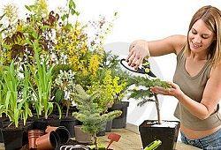Як розмножувати кімнатні рослини?