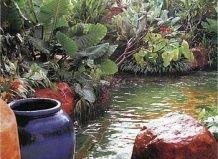 Як «освіжити» водойму