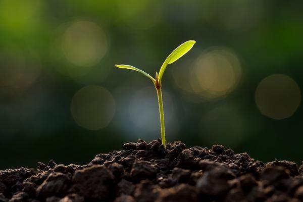 Склад суміші підбирають залежно від рослини