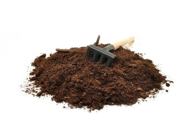 Торф - один з популярних компонентів розсадних почвосмесей