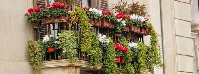 Як підібрати квіти для балкона?