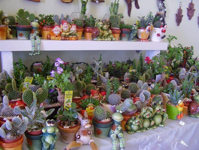 покупка кактусів