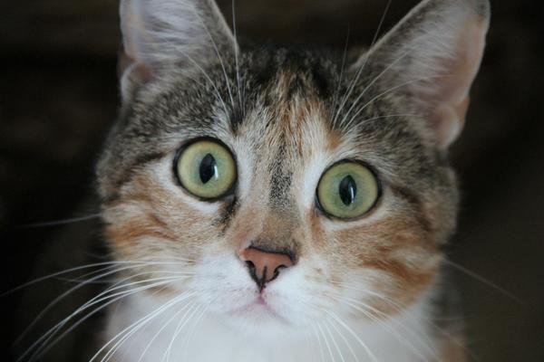 Кот, що залишився бездомним, може не пережити зиму
