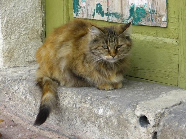 Загубився кота, можливо, шукають господарі - допоможіть їм зустрітися
