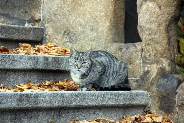 Бажання допомогти може спонукати вас забрати кота додому