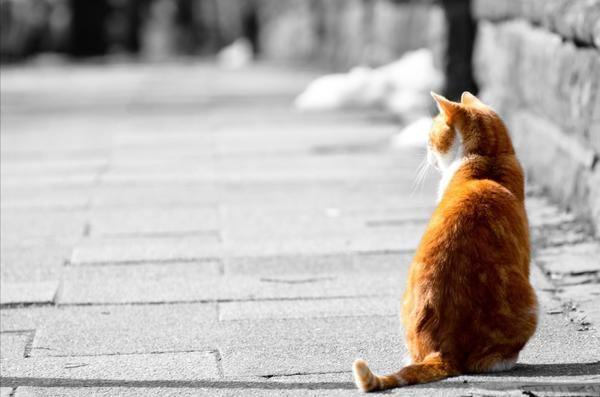 Нехай у кожного самотнього кота з`явиться новий будинок