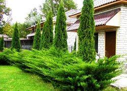 Ландшафтний дизайн дачі з хвойними рослинами