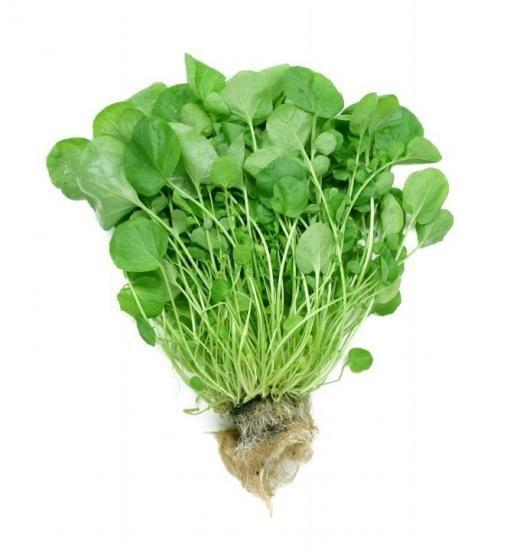 Як посадити салат на грядці?