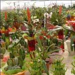Як правильно купити рослина
