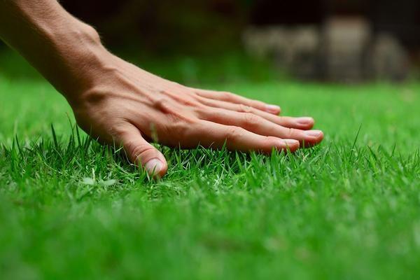 Як правильно посіяти газон: 9 докладних відеоінструкцій